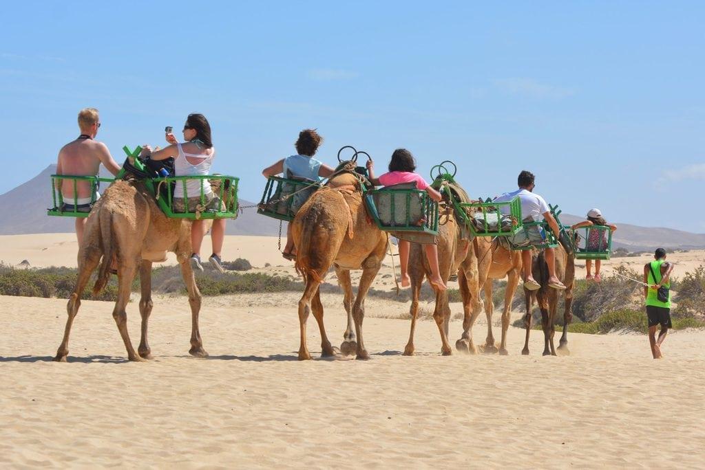 Animal Tourism - Camel Riding
