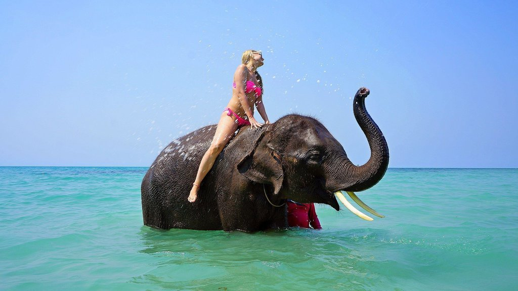 Animal Tourism - Elephant Riding