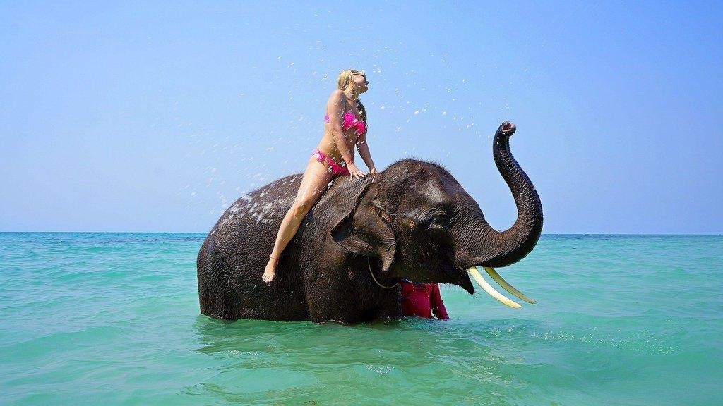 Animal Tourism - Elephant Riding