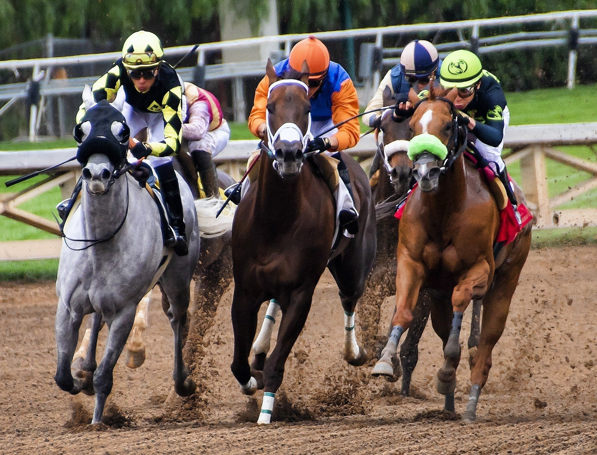 Animal Entertainment - Horse Racing