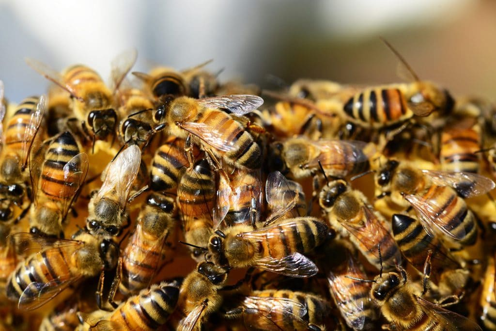 bees and bee behavior