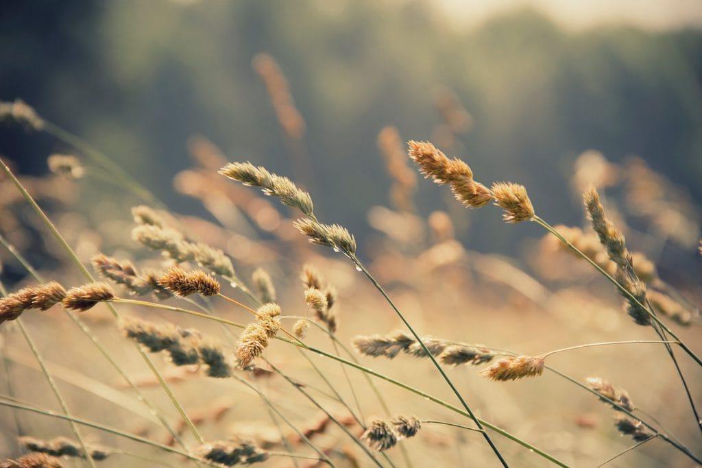 wheat allergies gluten-free