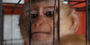 Animal Entertainment & Animal Tourism - Why You Should Avoid Them!